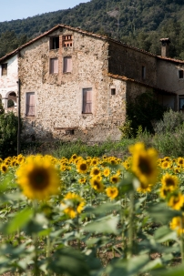 Sunflowers Mafe Roig Photography